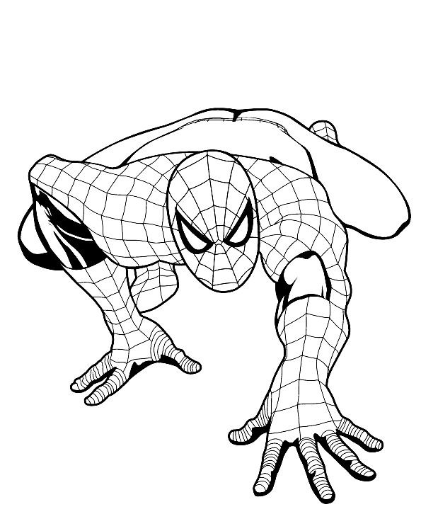 Spiderman benvenuti su ilpulcinobirichino for Disegni da colorare e stampare di spiderman